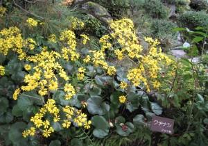 クチナシ。こんな黄色の花だったんだぁ。ちゃんと名前が書かれていて、勉強になりました
