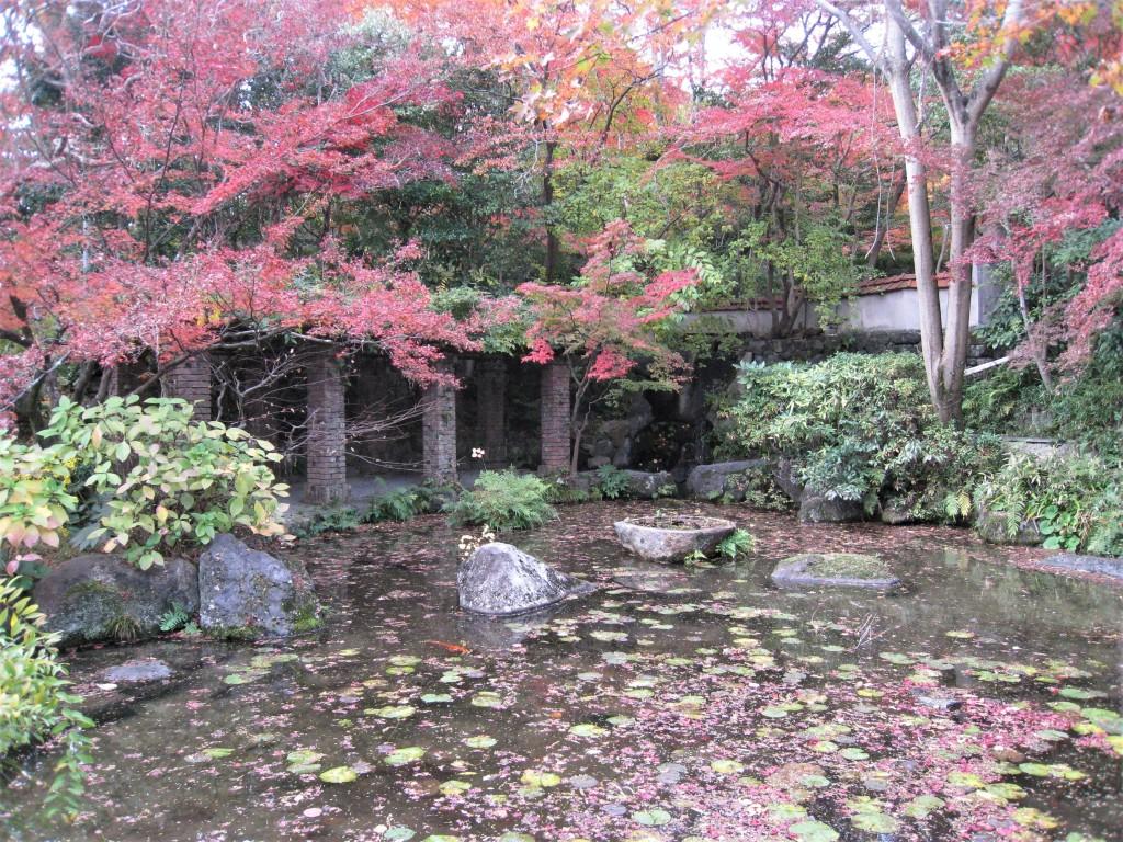 蓮が浮かぶ池